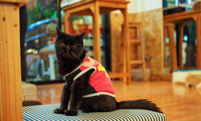 関東の猫カフェならココは外せない! おすすめ3選