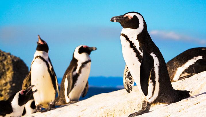 間近で可愛いペンギンに癒される♡ 本物のペンギンがいるペンギンカフェ4店舗ご紹介!