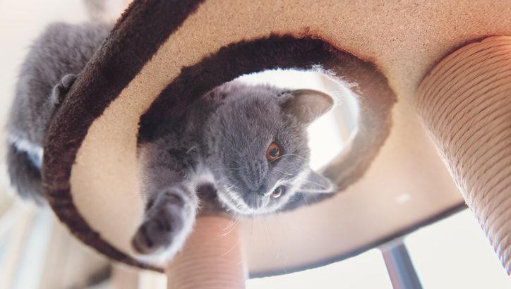 保護猫カフェ7選! 東京・大阪など人気店をご紹介♪