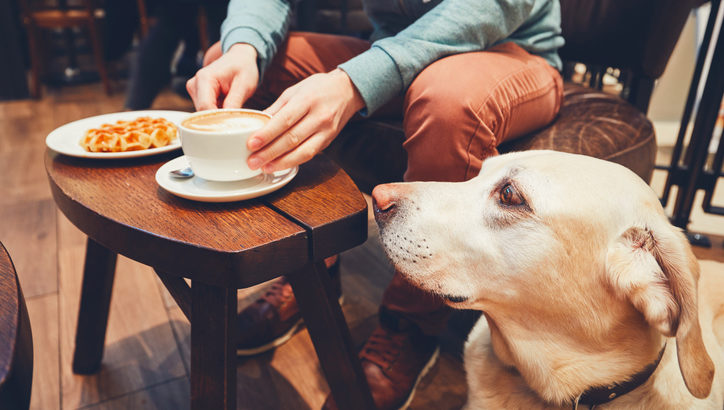施設併設で便利! ペットのワンちゃんと楽しめる「しろいぬカフェ」って?