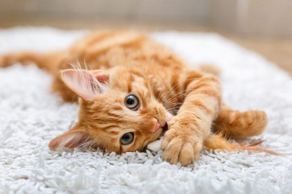 癒しを与えてくれる猫のおすすめ動画やSNSアカウントなど一気にご紹介!