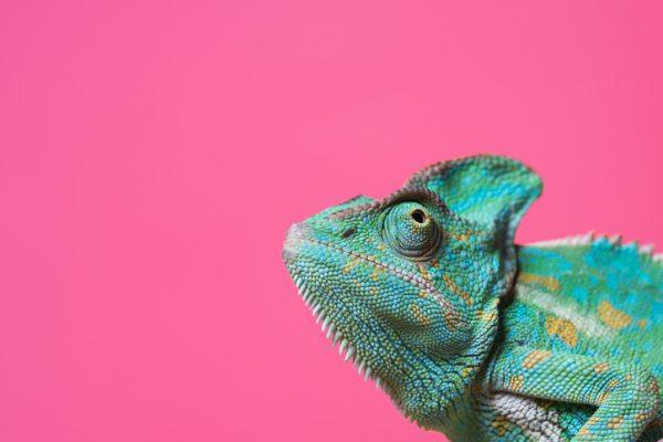 ペットにおすすめの爬虫類を紹介