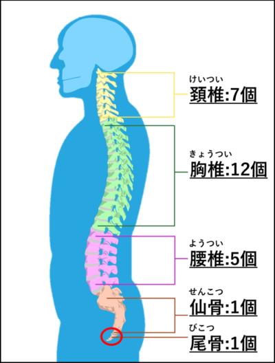 理学療法士が教えるボルダリングのための自宅トレーニング「脊柱」編