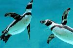 ペンギンと出会えるバーに行ったら、素敵な異性とも出会えた。