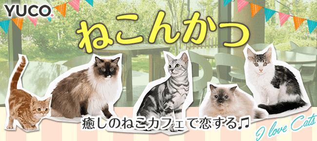 3/4 癒しのねこカフェで恋する♪ねこんかつ婚活パーティー@下北沢~猫好き集合!~