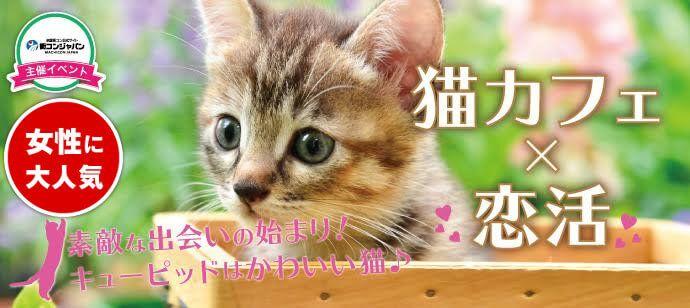 4/16日(日)お洒落な店内でかわいい猫ちゃんと触れ合おう♪ 猫カフェMoCHA@原宿【男性:24~33歳×女性:22~30歳】