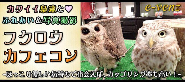 3月31日(金)貴重な餌やり体験もできる!可愛いフクロウと鷹に癒されよう!フクロウ&鷹カフェコン!