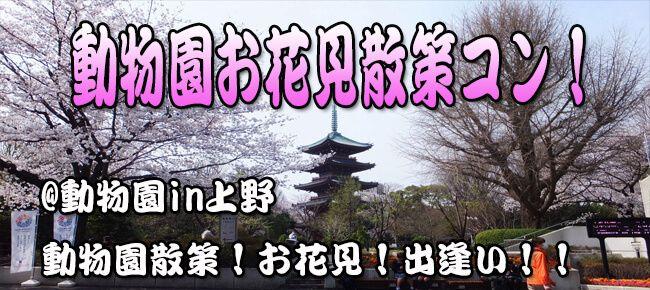 4月2日(日) お花見シーズンに!大人の遠足!上野のパンダと桜を見に行こう!動物園お花見ウォーキングコン!