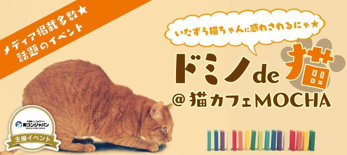 4/28(金)【メディア掲載多数★ドミノ×猫】グループで協力してドミノを完成させよう!@猫カフェMoCHA池袋