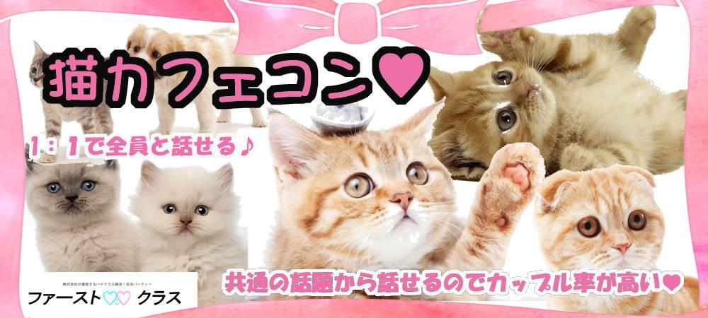 【福島駅周辺】第3回猫カフェDE動物好きの優しい性格のよい理想の出会いを見つけよう!
