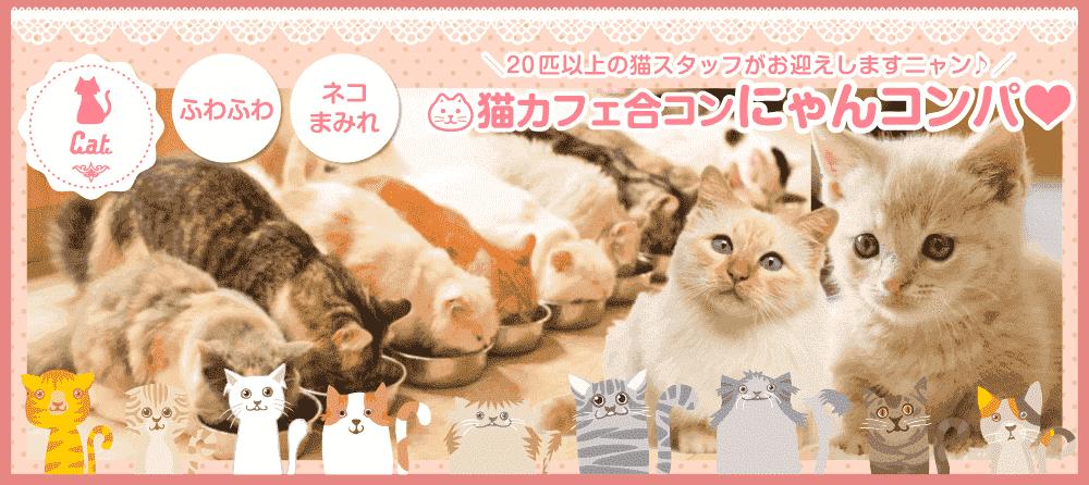 【男性23~32歳、女性20~29歳】至福のおやつタイムもあるよ☆20匹以上の猫スタッフがお出迎え♪『猫カフェ合コン~ニャンコンパ❤~』