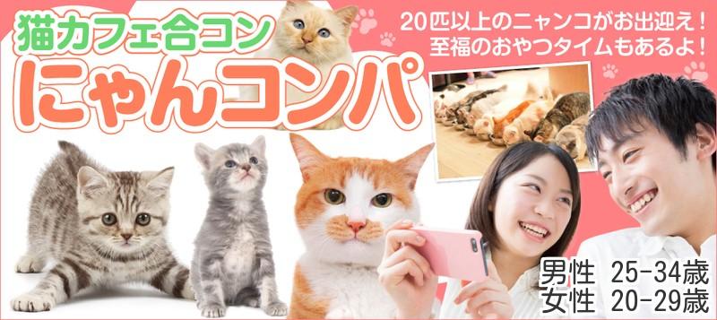 【男性25~34歳、女性20~29歳】☆クリスマスまで1カ月☆至福のおやつタイムもあるよ♪『猫カフェ合コン~ニャンコンパ❤~』