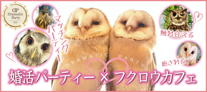 DRAMATIC PARTY 婚活×フクロウカフェ