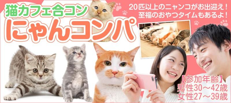 【男性30~42歳、女性27~39歳】ご縁を招くにゃんコンパ♪~20匹以上の猫スタッフがお出迎えいたします☆~