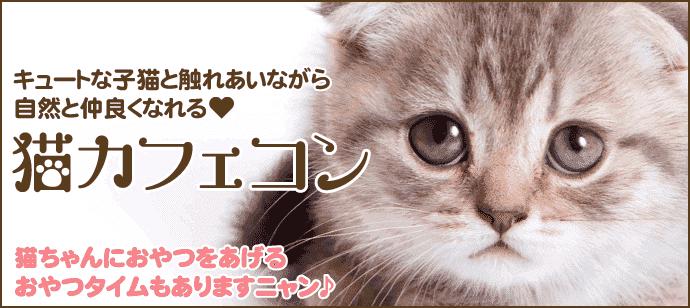 【猫ちゃんのおやつタイムあり!】猫カフェコン☆【女性お一人参加歓迎♪】