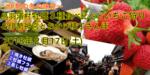 【梅田のプチ街コン】恋旅企画主催 2018年2月17日
