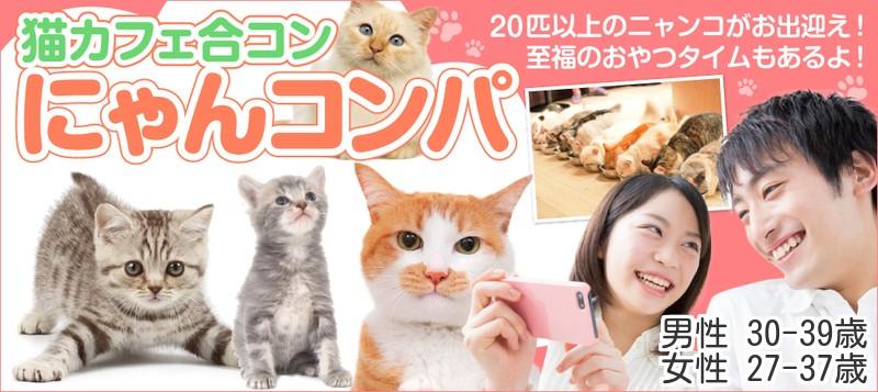 【男性30~39歳、女性27~37歳】猫カフェ貸切♪20匹以上の猫スタッフがお出迎え☆猫カフェ合コン にゃんコンパ♪