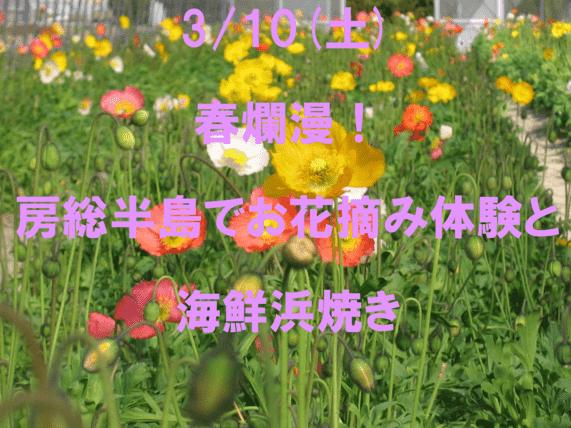 【婚活バスツアー】 春爛漫!房総半島でお花摘み体験と海鮮浜焼き