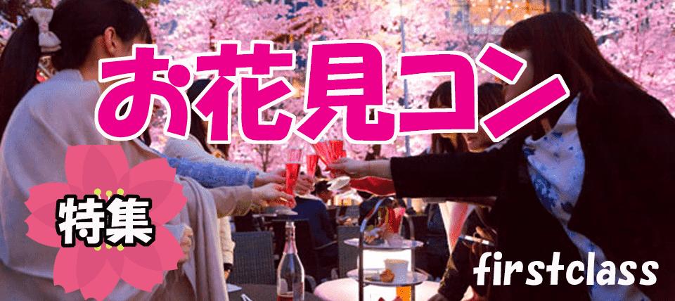 【昼花見コン】仙台西公園でお花見コン、ビッフェスタイル飲み放題パーティー!!