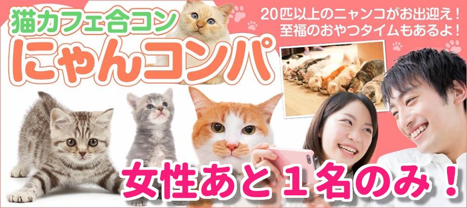 【男性23~32歳、女性20~29歳】社会貢献型イベント!☆保護猫カフェ合コン にゃんコンパ♪