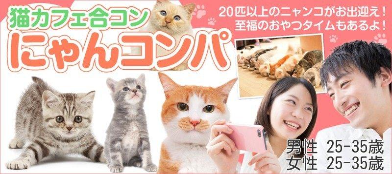 【男性25~35歳、女性25~35歳】猫ちゃんワクワクおやつタイムもあるよ☆猫カフェ合コン にゃんコンパ♪