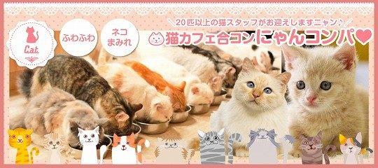 【男性30〜42歳、女性25〜39歳】猫ちゃんワクワクおやつタイムもあるよ☆猫カフェ合コン☆にゃんコンパ♪