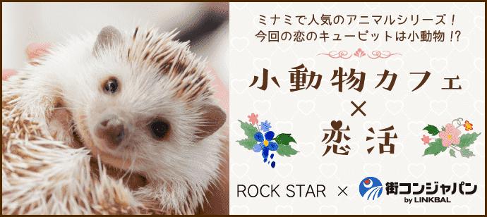 【お1人参加多数!】かわいい小動物に癒されよう♪恋活パーティー☆~小動物カフェROCKSTAR~【朝活・趣味活】