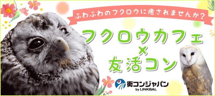 第2回フクロウのみせ 博多店×街コンジャパン
