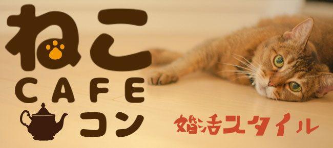 30代・40代限定!会場まるごと貸切♪癒し猫カフェコン【恵比寿】