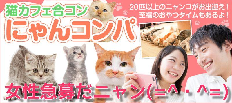 【男性23~32歳、女性20~29歳】猫まみれになれるワクワクおやつタイム有り☆猫カフェ合コン にゃんコンパ♪