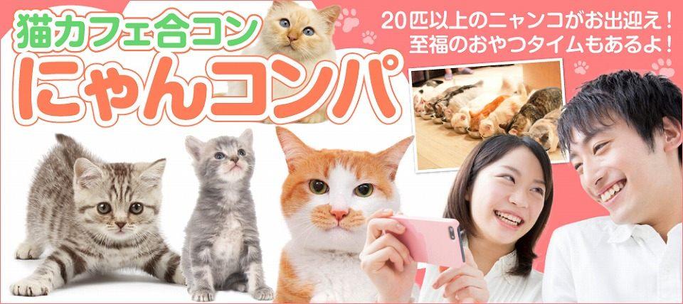 【男性27~37歳、女性25~35歳】モフモフ猫まみれになれるおやつタイムもあるよ☆猫カフェ合コン にゃんコンパ♪