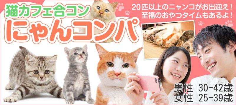 【男性30~42歳、女性25~39歳】リラックスしながら猫好き交流☆ゆる~く癒しの猫カフェ体験~にゃんコンパ♪~