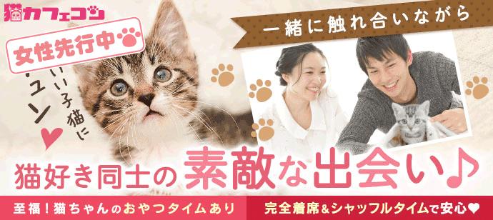 人気の猫カフェを貸切☆猫カフェコン【至福のおやつタイムあり☆女性お一人参加多数♪】