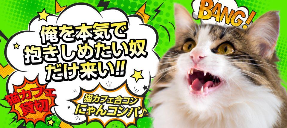 【女性激安】☆ちょっぴり歳の差☆猫カフェ貸切でモフモフ猫まみれ♪~猫カフェ合コン にゃんコンパ♪~