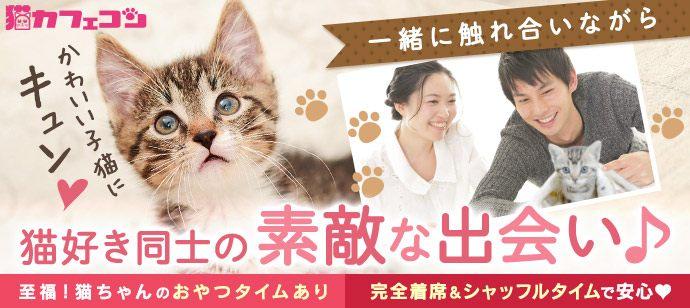 人気の猫カフェを貸切☆猫カフェコン【至福のおやつタイムあり☆女性お一人参加多数♪】☆