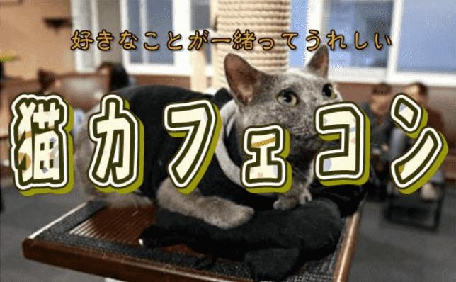 9/24(月)休日にネコちゃん達とまったり楽しもう♪くつろぎと癒しの空間で出会う猫カフェコン♡ 【中野駅から徒歩5分の好立地】
