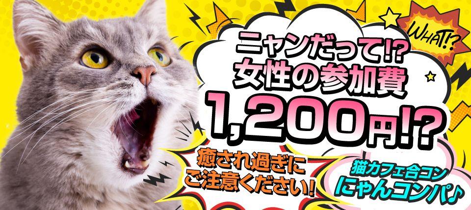 【猫カフェ貸切】都内最大級!人慣れ度抜群の20匹の猫ちゃんがお出迎え☆癒され過ぎてカップル続々誕生☆~猫カフェ体験 にゃんコンパ♪~