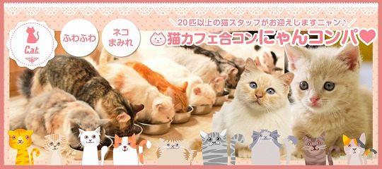 【猫カフェ貸切】ニャンだって!?女性の参加費1,200円!? 癒され過ぎにご注意ください☆~猫カフェ合コン にゃんコンパ♪~