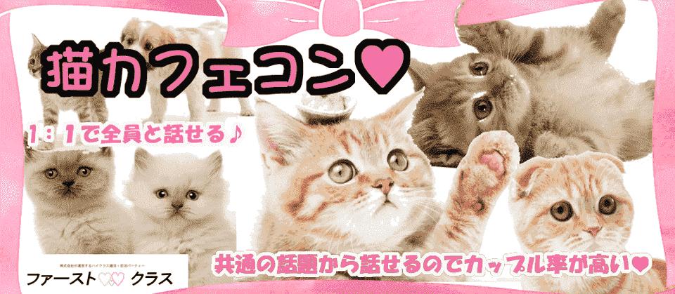 大人気♡♡第23回【仙台】猫カフェDEのんびーり恋活♡動物好きの優しい性格のよい理想の出会いを見つけよう☆彡