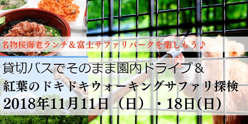 名古屋発!富士サファリパーク!貸切バスでそのままドライブ&紅葉のウォーキングサファリ探検【婚活バスツアー】