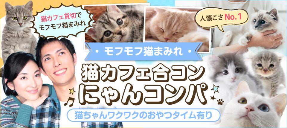 【猫カフェ貸切】☆モフモフ猫まみれ☆触れる・遊べる・癒される☆~猫カフェ体験 にゃんコンパ♪~