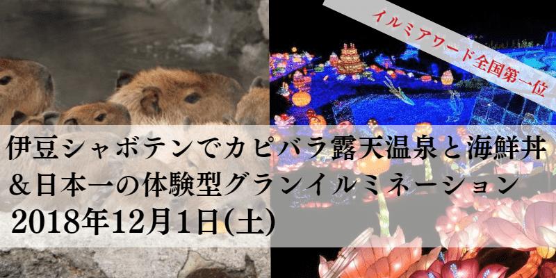 東京発!12/1(土) 伊豆カピバラ&グランイルミ 【婚活バスツアー】