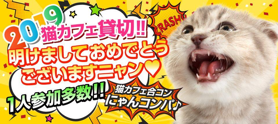 ★猫がいっぱいいる猫カフェ貸切★触れる・遊べる・癒される~猫カフェ体験 にゃんコンパ♪~