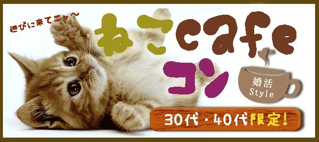 《 猫好きの、ねこ好きによる、ネコ好きのための企画♪ 》 癒しねこCafeコンin恵比寿!