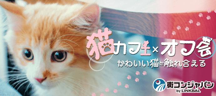好評企画★猫カフェ×オフ会 【友達作り・社会人サークル】
