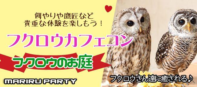 1月26日(土)【大人気フクロウカフェ完全貸切】貴重な体験!可愛いフクロウに癒されよう!原宿フクロウカフェコン!