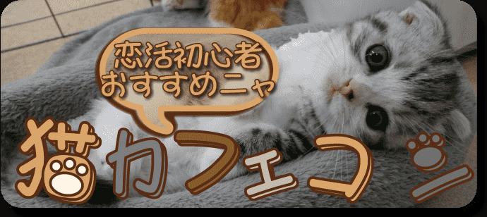 猫カフェコン  in nyanchi