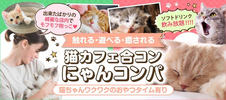 【赤羽】目指せ!令和元年婚 ★☆1人参加 中心★☆ 触れる・遊べる・癒される♪~保護 猫カフェ体験 にゃんコンパ♪~