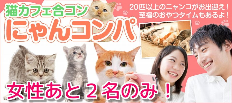 ★☆目指せ!令和元年婚★☆猫好きさん集まれ(^^)/ 甘えん坊な猫ちゃんがいっぱい! 触れる・遊べる・癒される~猫カフェ体験 にゃんコンパ♪~