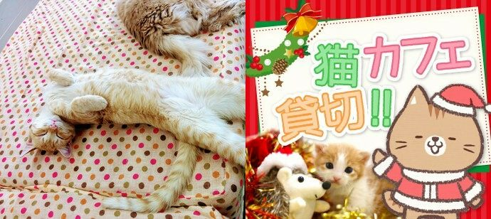 ★☆猫カフェ貸切★☆ ニャンタクロースの奇跡♪  触れる・遊べる・癒される ~猫カフェ合コン にゃんコンパ♪~